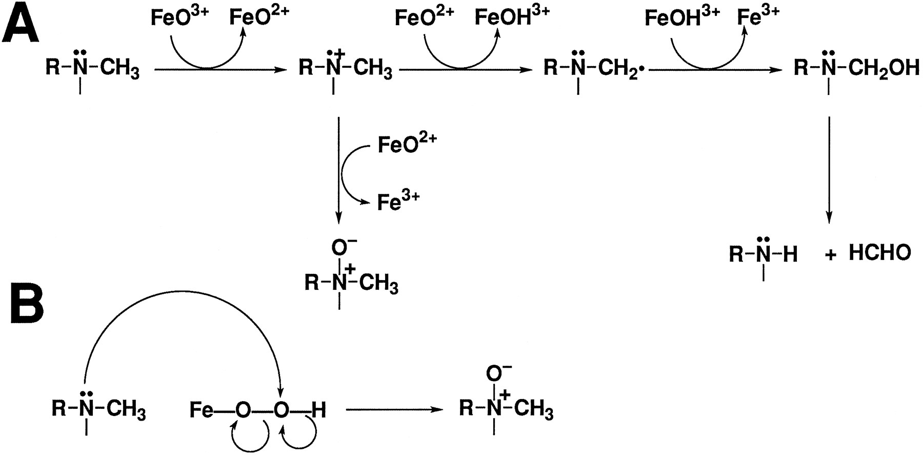 Evidence For A Role Of Perferryl Oxygen Complex Feo3 In The N Atomic Structure Diagram Open New Tab Download Powerpoint Figure 2 Possible Mechanisms Oxygenation By P450 Sequential Electron Transfer Followed