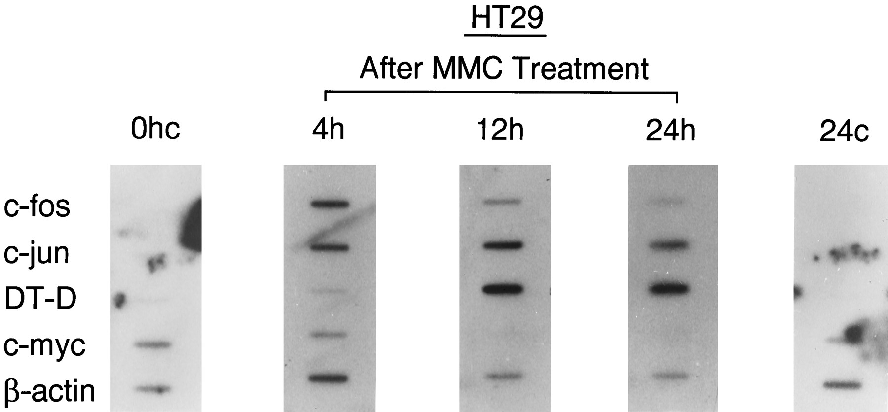 Involvement of Activator Protein-1 and Nuclear Factor-κB