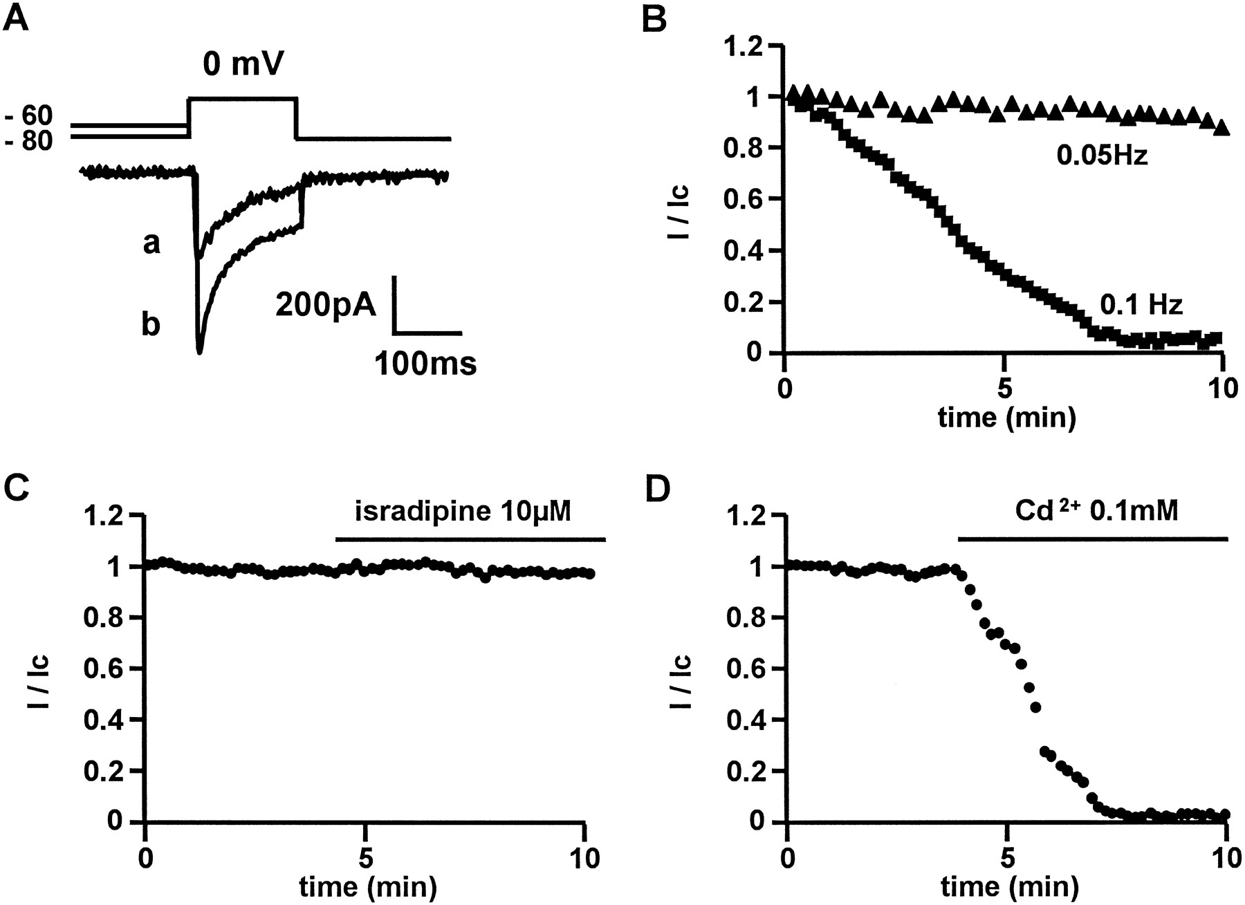 Purification of a New Dimeric Protein from Cliona vastifica Sponge