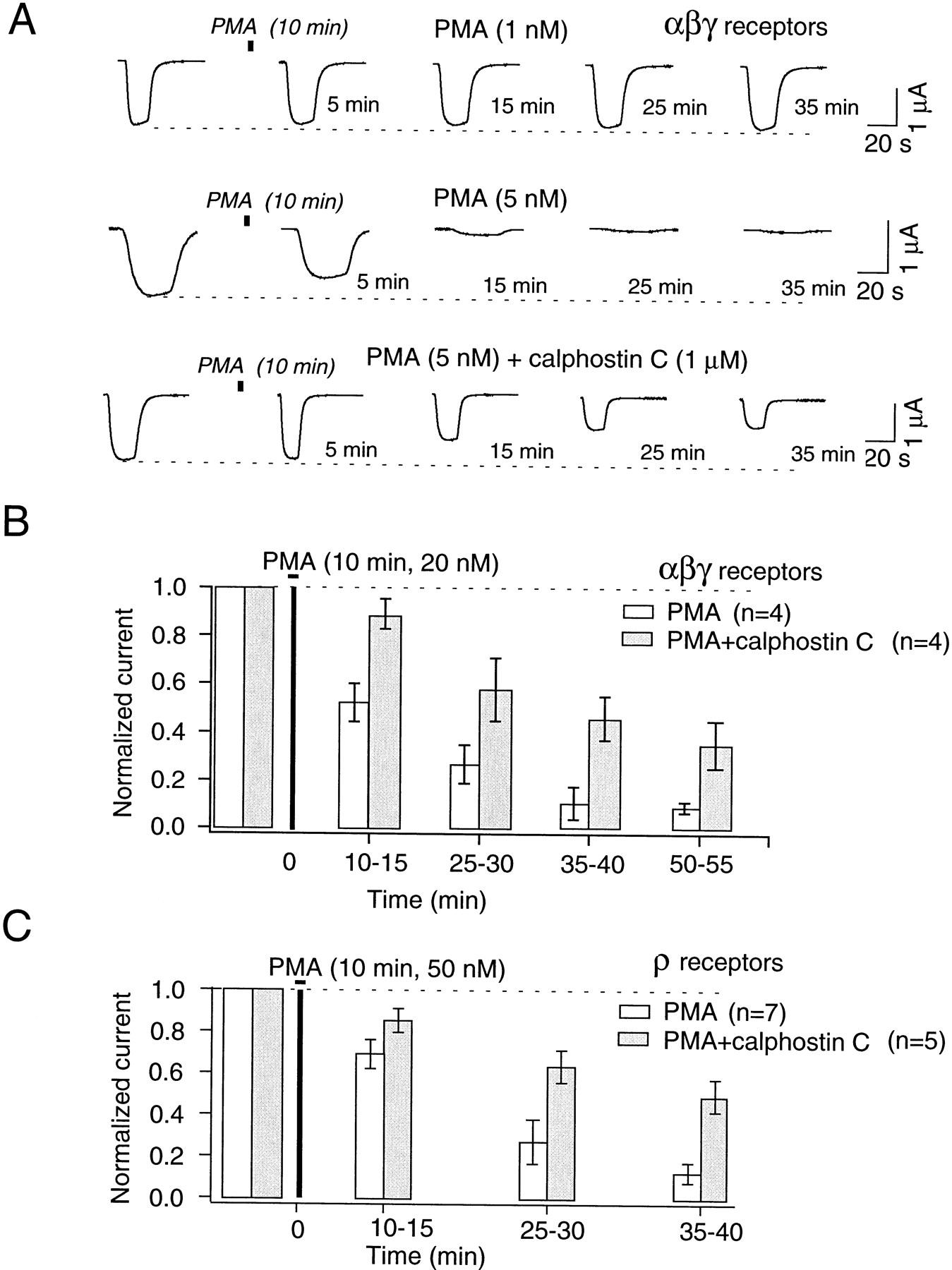 Regulation of Recombinant γ-Aminobutyric Acid (GABA)A and GABAC