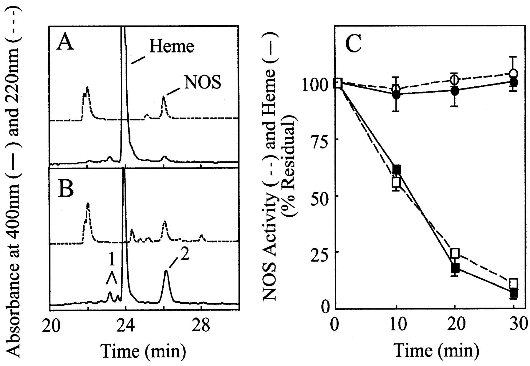 Agmatine Enhances the NADPH Oxidase Activity of Neuronal NO