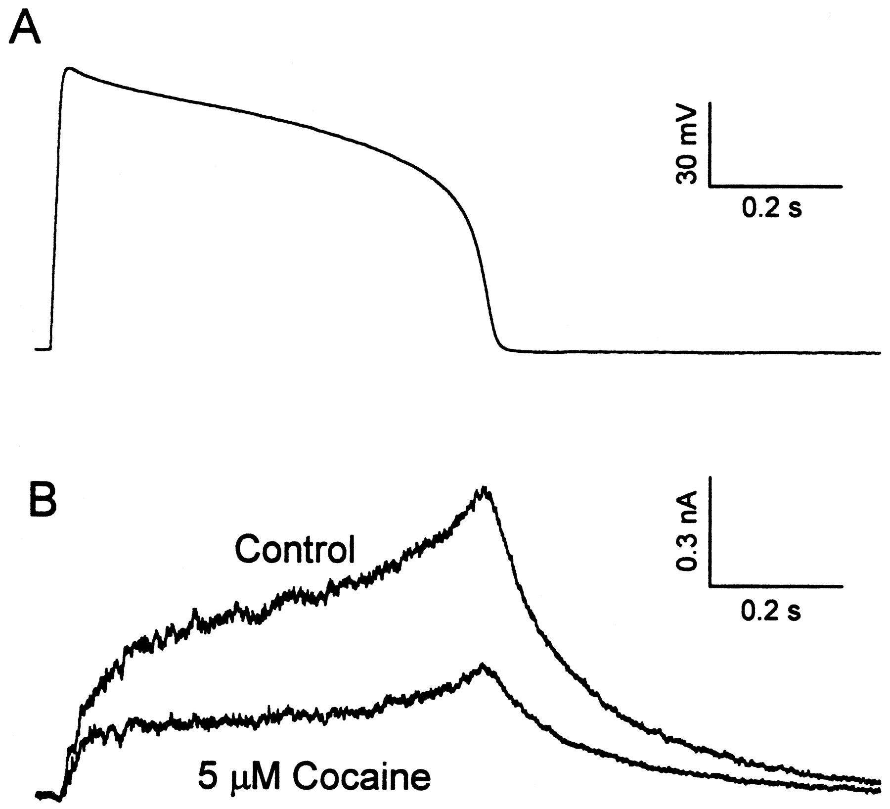 8 what was the effect of ether on eliciting an action potential View christopher parsons' profile  mechanism of action (moa) underlying the potential neuroprotective treatment  and crown ether compounds as interesting.