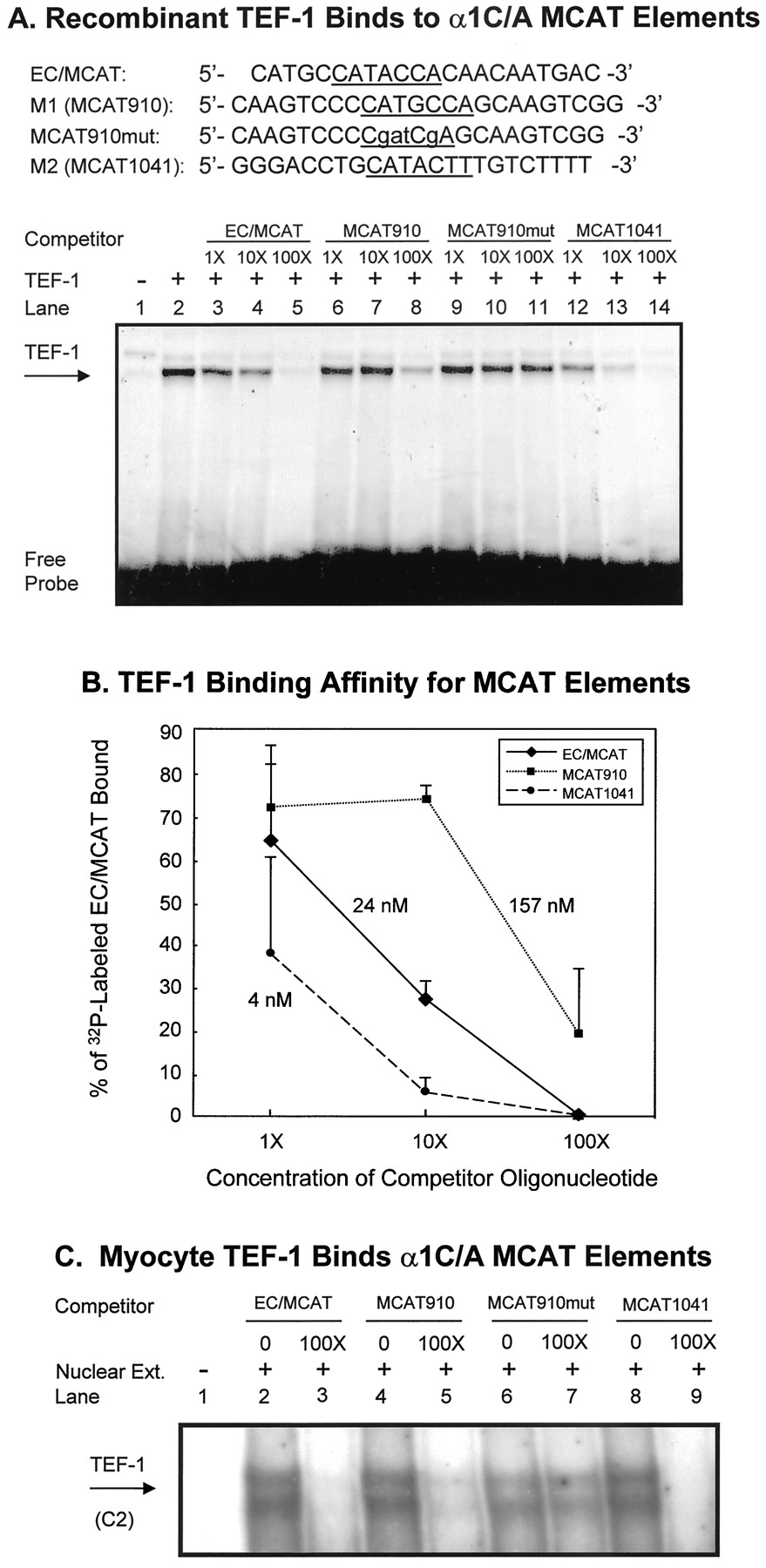 Cloning and Characterization of the Mouse α1C/A-Adrenergic
