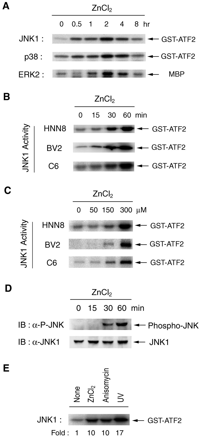 Zn2 induces stimulation of the c jun n terminal kinase signaling download figure geenschuldenfo Image collections
