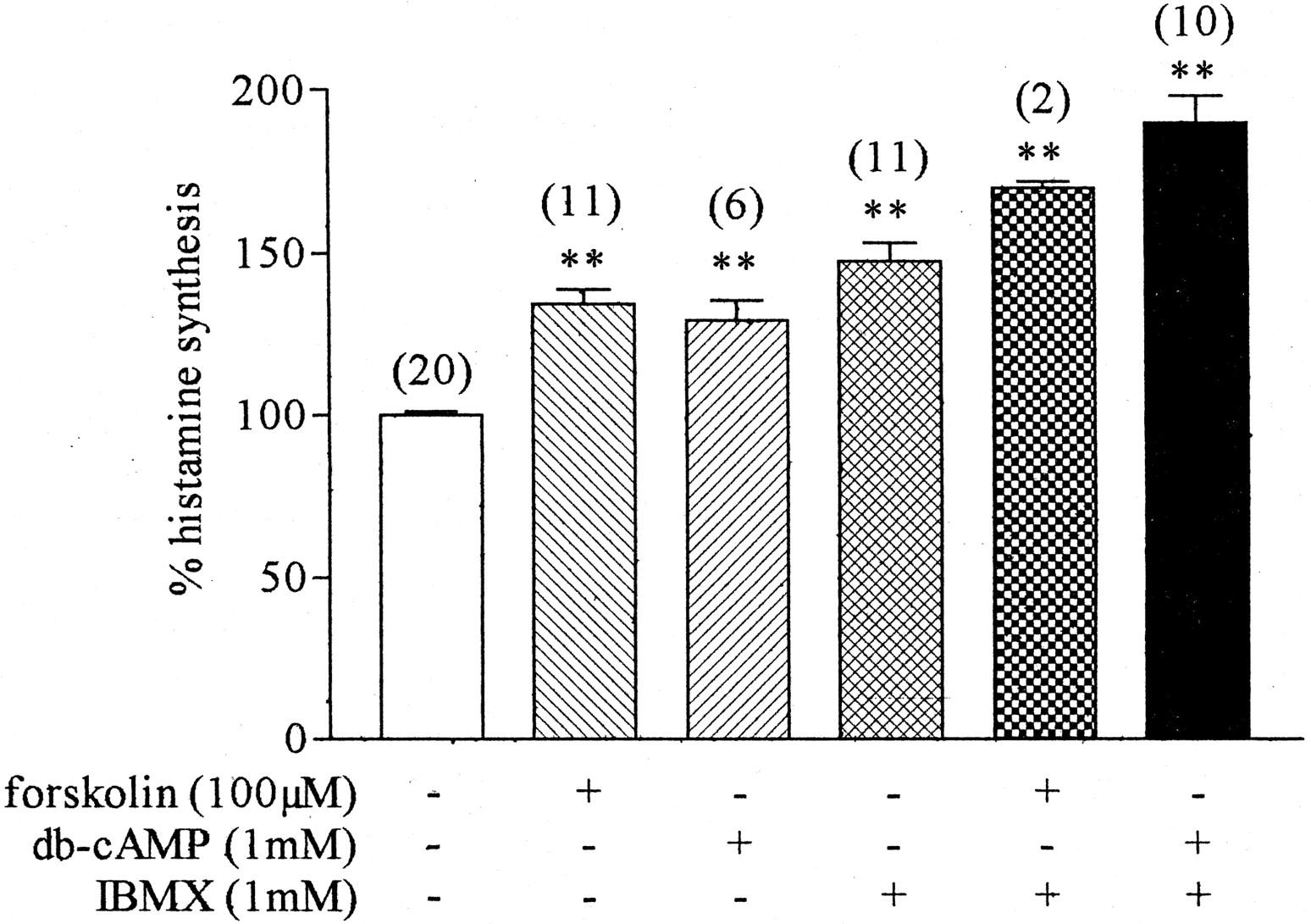 Presynaptic H3 Autoreceptors Modulate Histamine Synthesis through