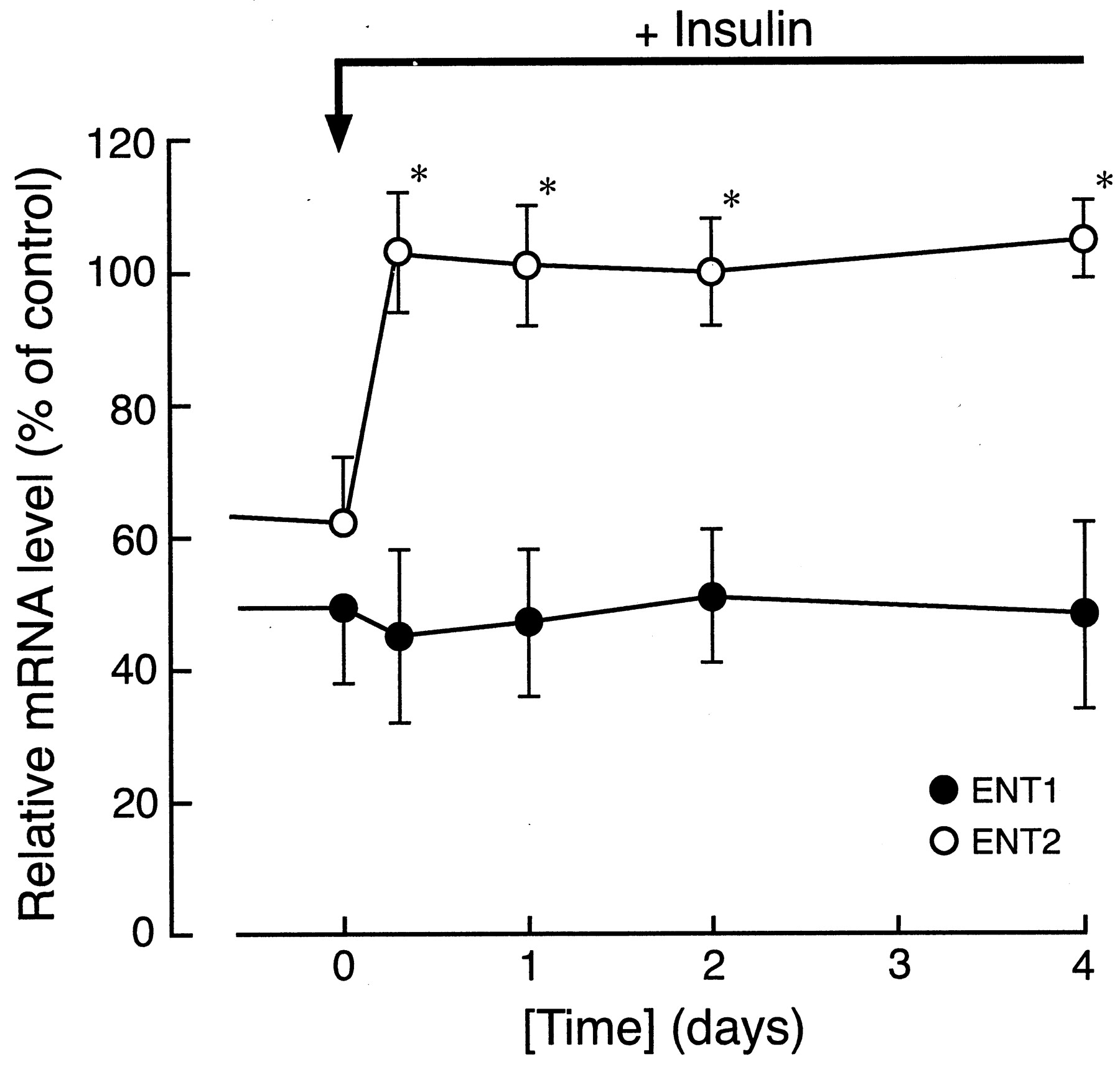 The Effect Of Insulin On Expression Level Nucleoside Transporters Jackson Rhoads V Wiring Diagram For Download Figure Open In New Tab