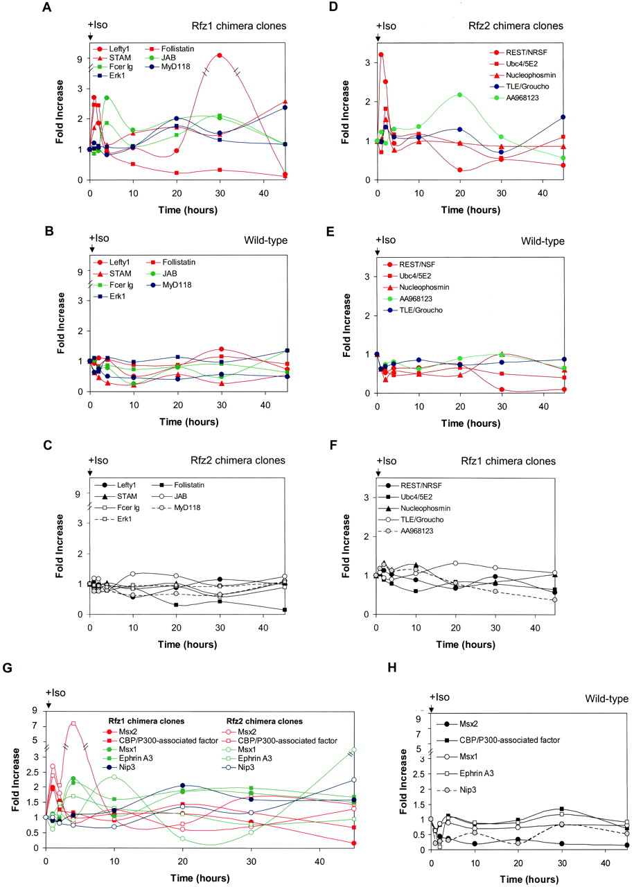 Gene Profiling of Frizzled-1 and Frizzled-2 Signaling