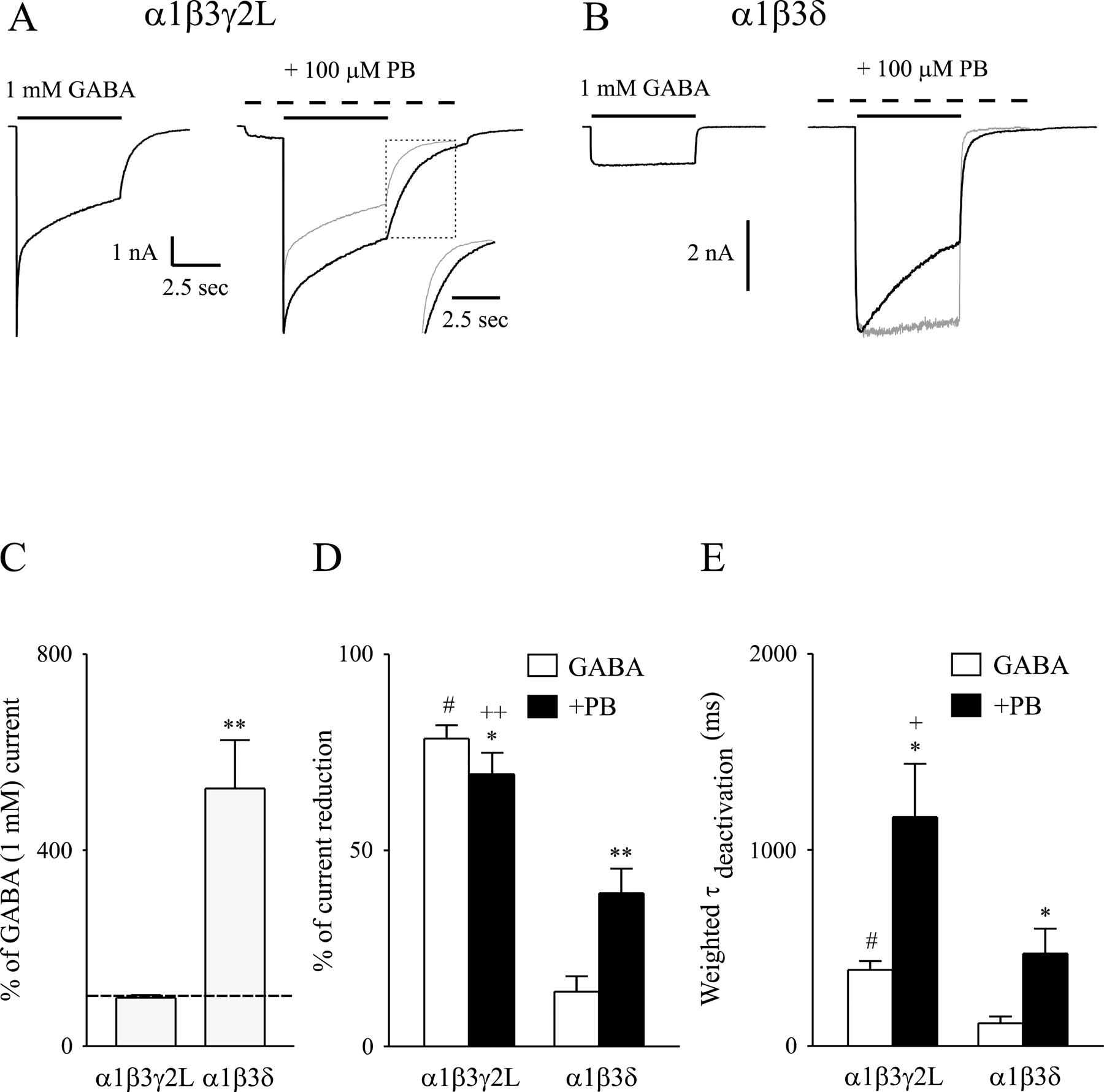 Pentobarbital Differentially Modulates α1β3δ and α1β3γ2L GABAA
