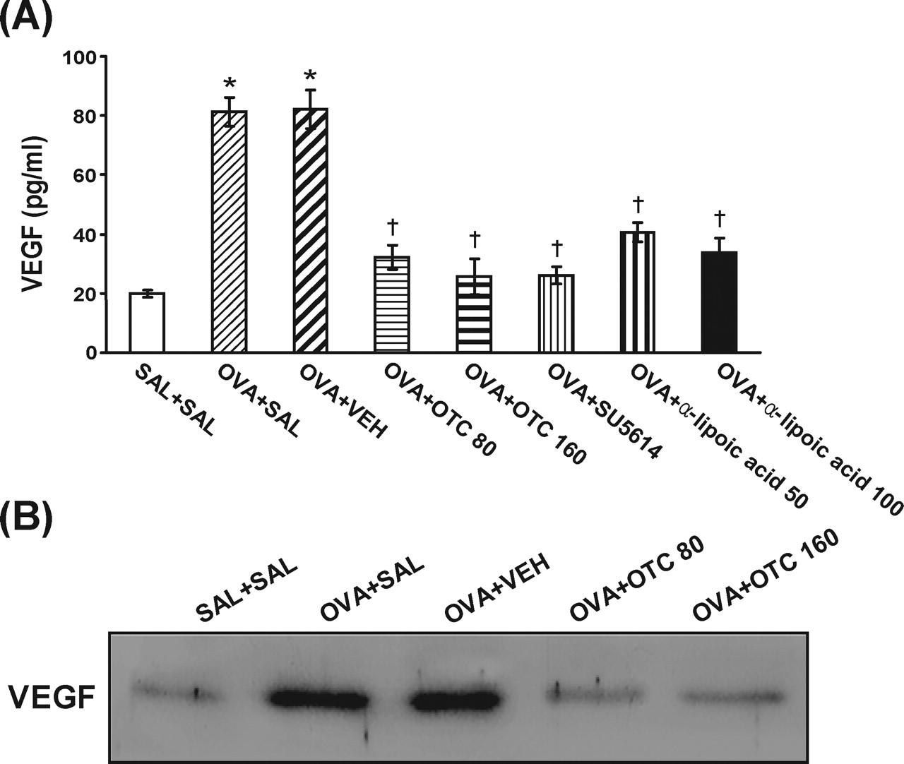 A Prodrug of Cysteine, l-2-Oxothiazolidine-4-carboxylic Acid