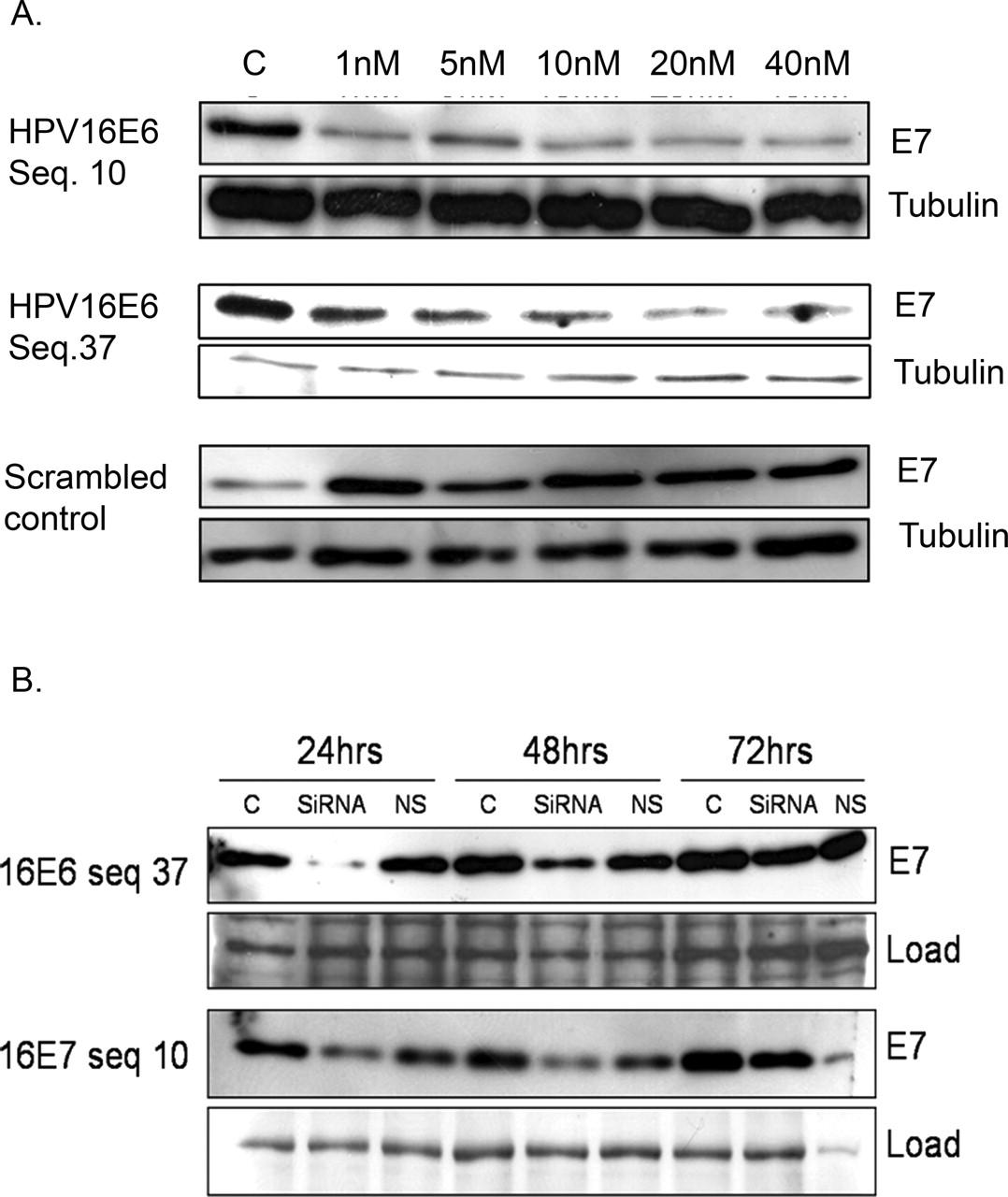 résultat hpv oncogène positif