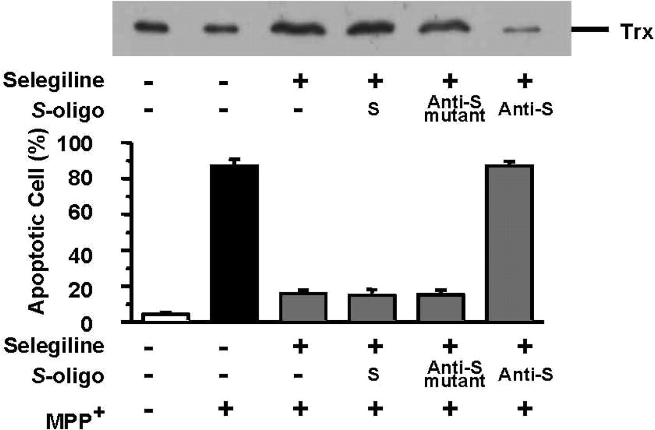 Role of the Redox Protein Thioredoxin in Cytoprotective