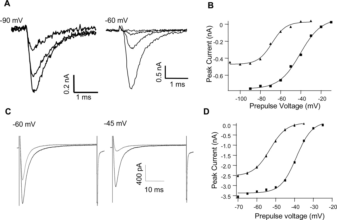 Block Of Peripheral Nerve Sodium Channels Selectively Inhibits Westpointe 3 Speed Fan Wiring Schematic Download Figure