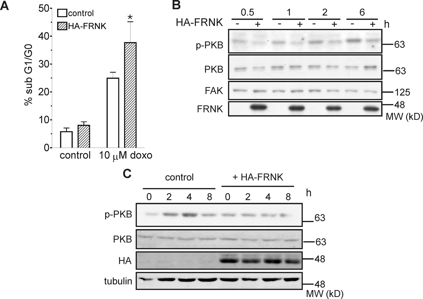 Focal Adhesion Kinase And Protein Kinase B Cooperate To Suppress