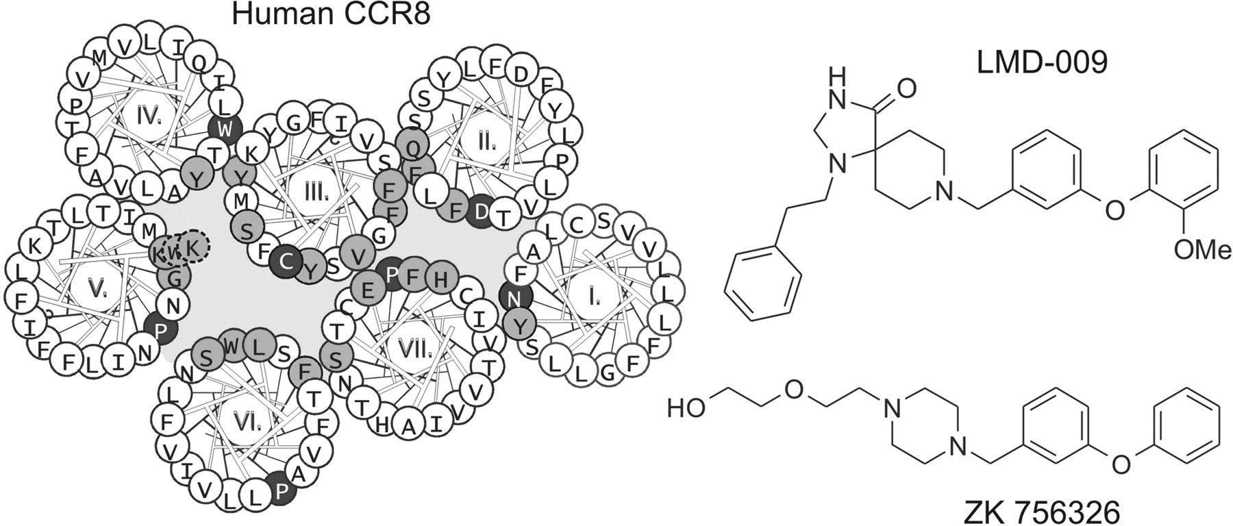 molecular interaction of a potent nonpeptide agonist with