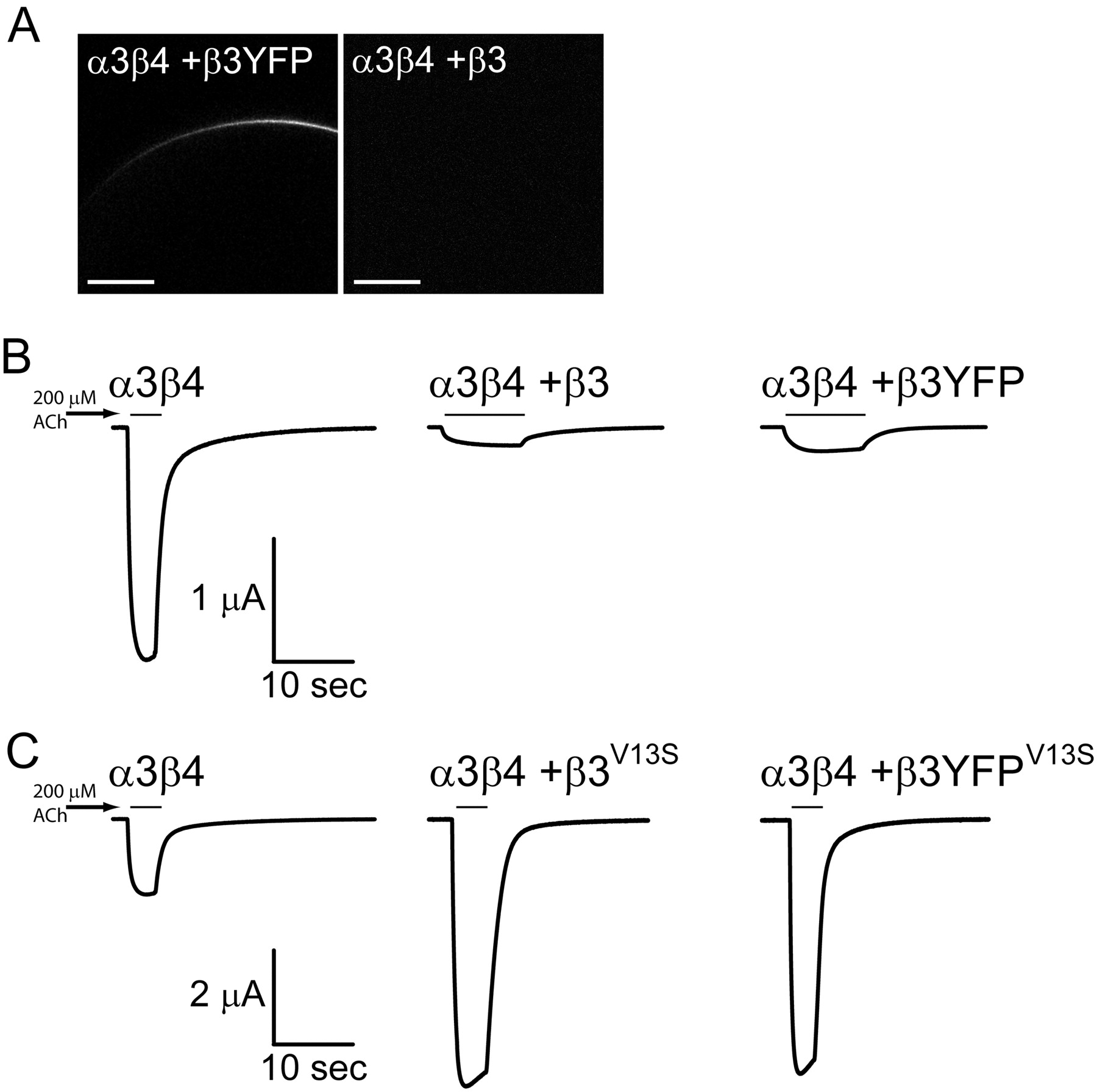 Subcellular Trafficking Pentameric Assembly And Subunit Schematic Wiring Diagram Ach 800 Download Figure