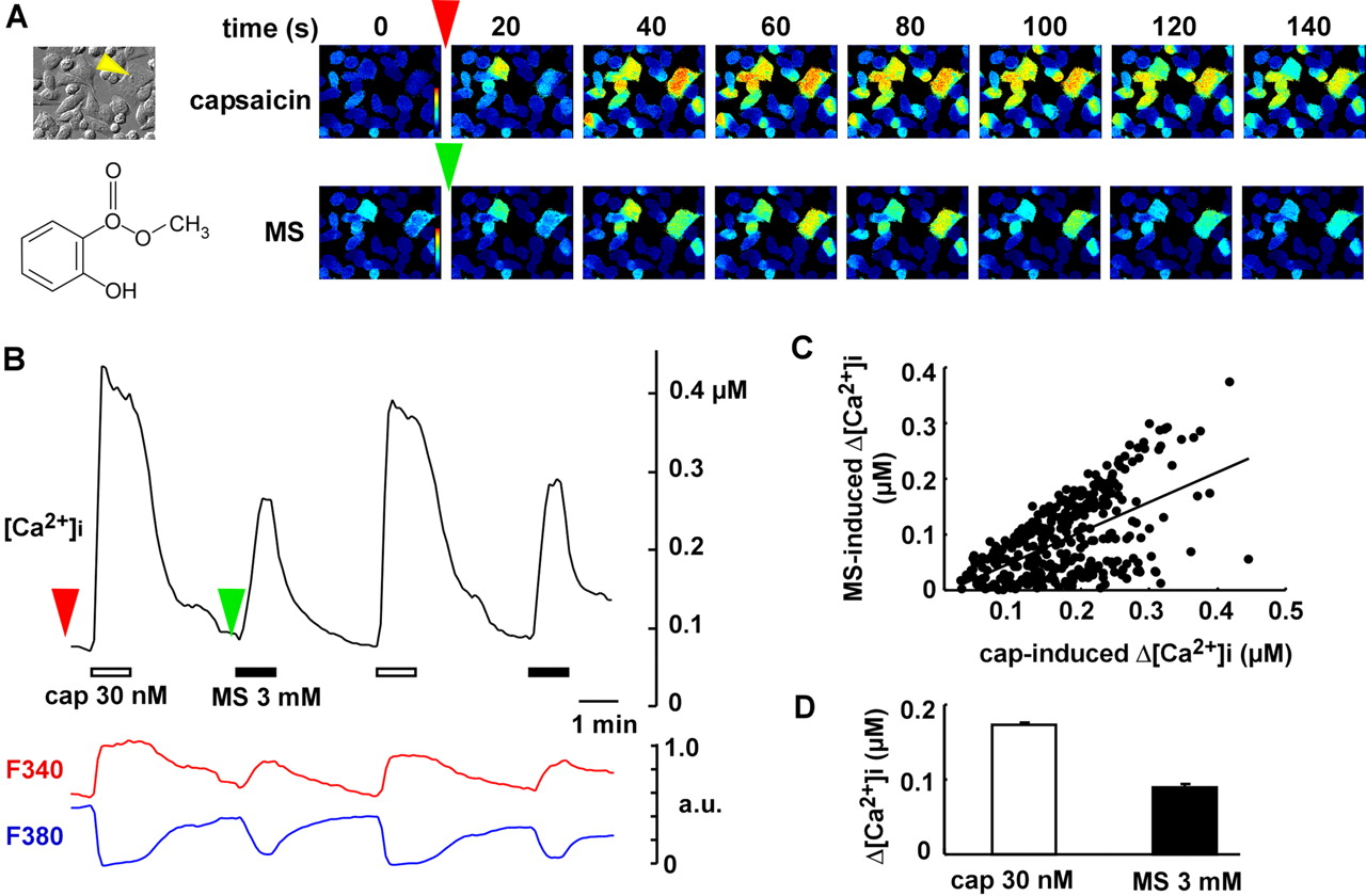 Involvement Of Transient Receptor Potential Vanilloid Subtype 1 In 2004 F450 The Turn Signals And Flasherscircuittrailer Download Figure