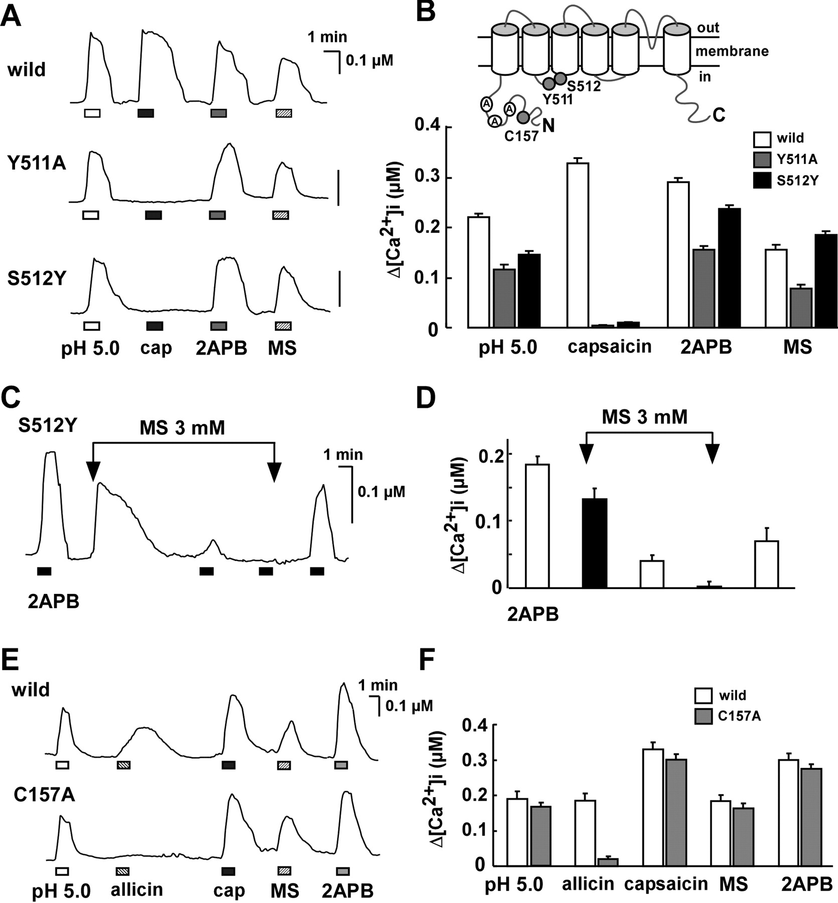 Involvement of Transient Receptor Potential Vanilloid