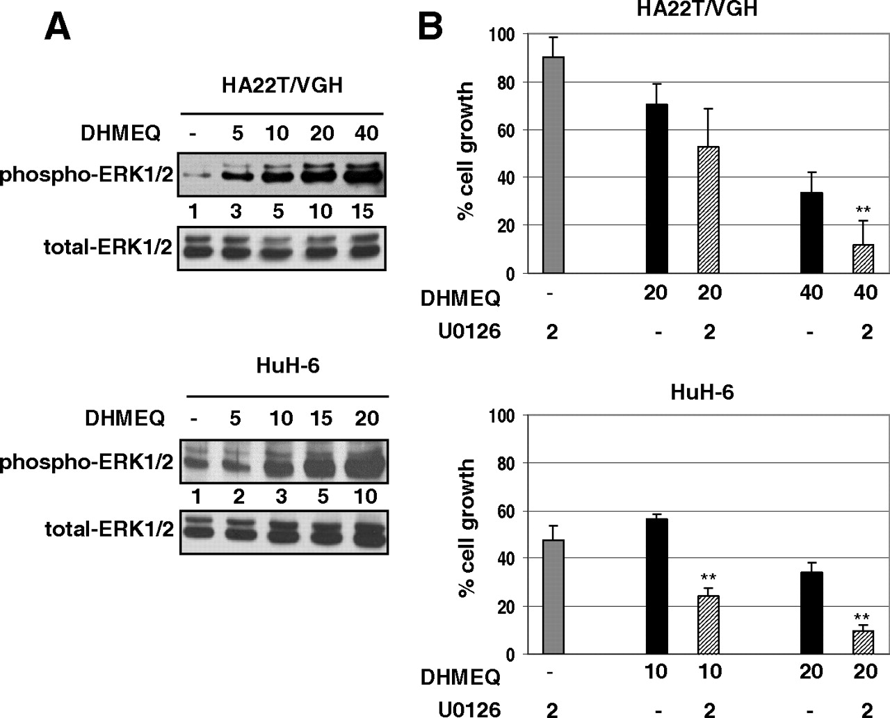 Antitumor Effects Of Dehydroxymethylepoxyquinomicin A Novel Nuclear
