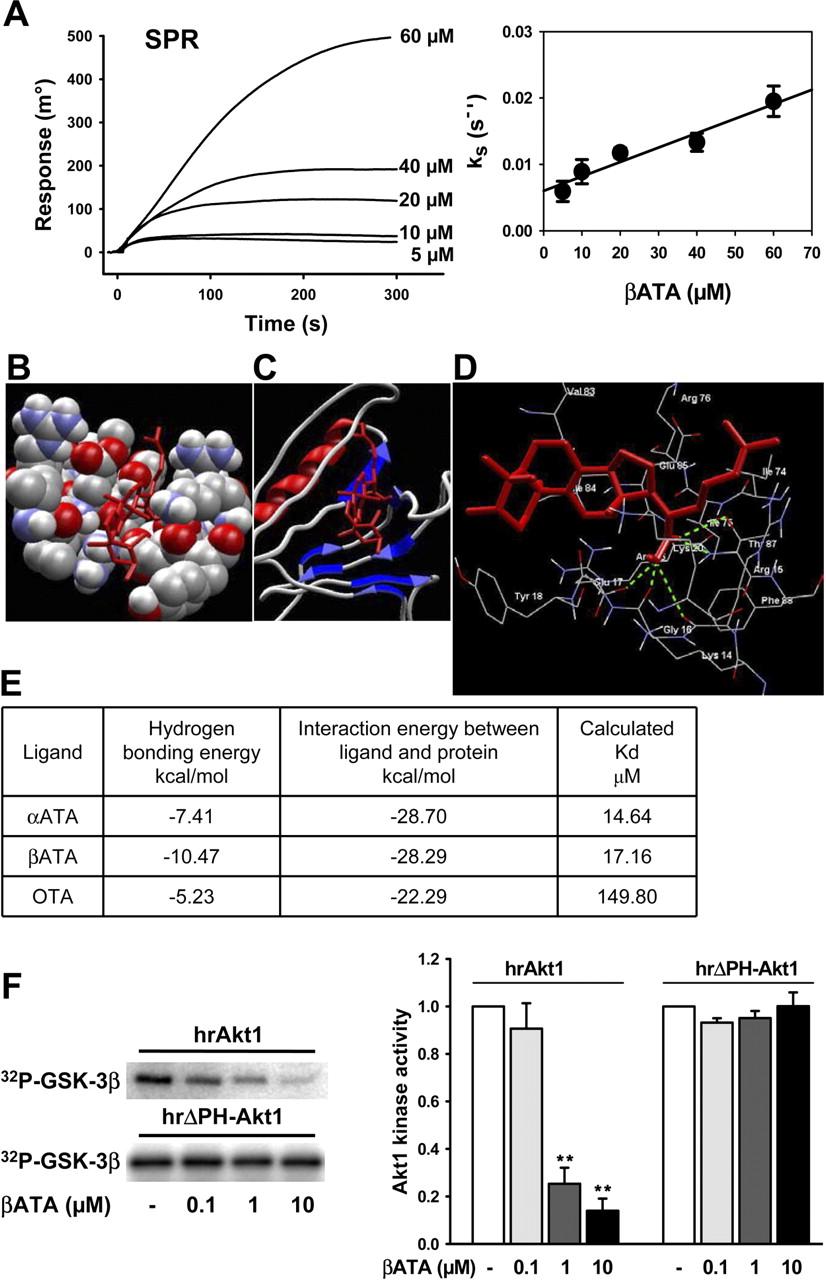 Tirucallic Acids Are Novel Pleckstrin Homology Domain