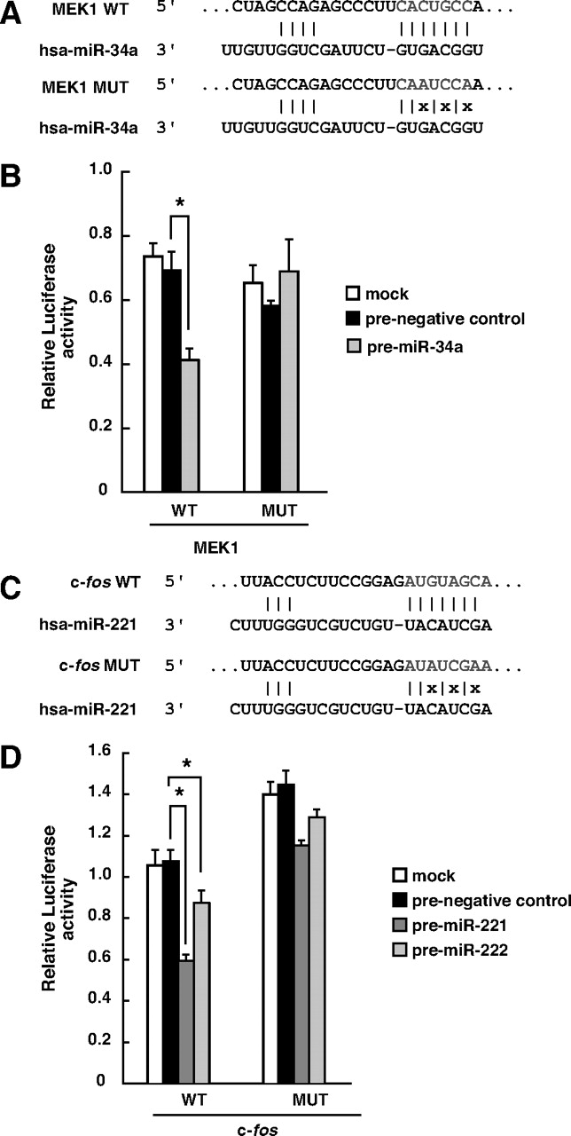 MicroRNA-34a Inhibits Cell Proliferation by Repressing Mitogen
