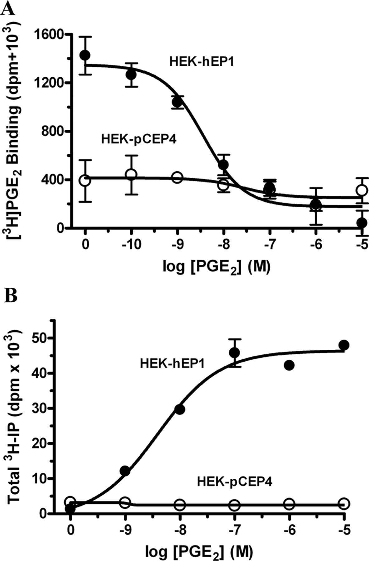 EP1 Prostanoid Receptor Coupling to Gi/o Up-Regulates the