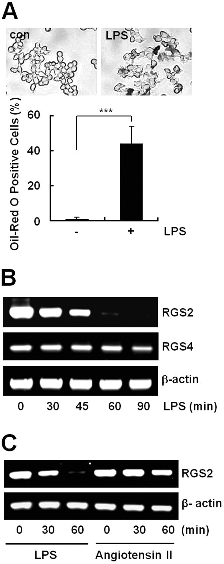 Protein kinase c and phospholipase d2 pathway regulates foam download figure ccuart Image collections
