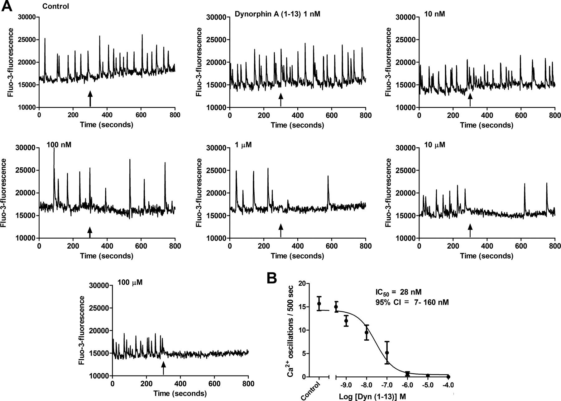 Opioid Receptor Inhibition Of Calcium Oscillations In Spinal Cord