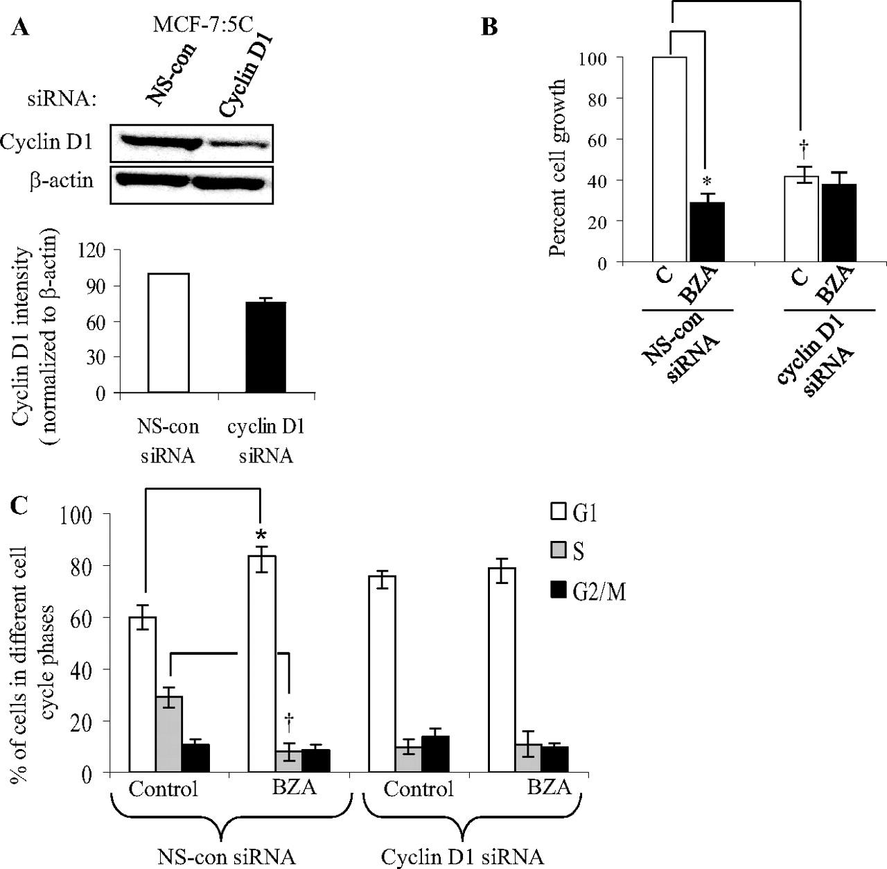The Selective Estrogen Receptor Modulator Bazedoxifene Inhibits Besides Dish Work Rf On Wiring Diagram Download Figure