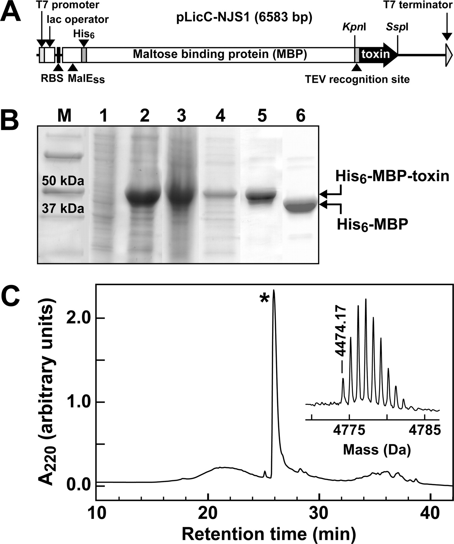 a dynamic pharmacophore drives the interaction between psalmotoxin 1