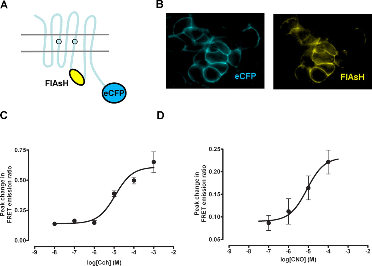 Developing Chemical Genetic Approaches To Explore G Protein Coupled Vacuum Flash Ox 500 Download Figure