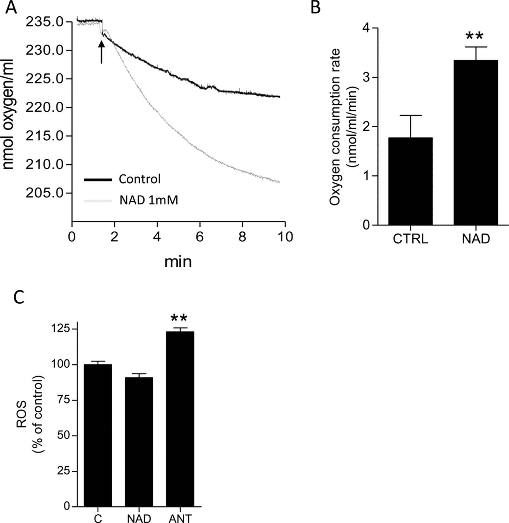 Pharmacological Effects of Exogenous NAD on Mitochondrial