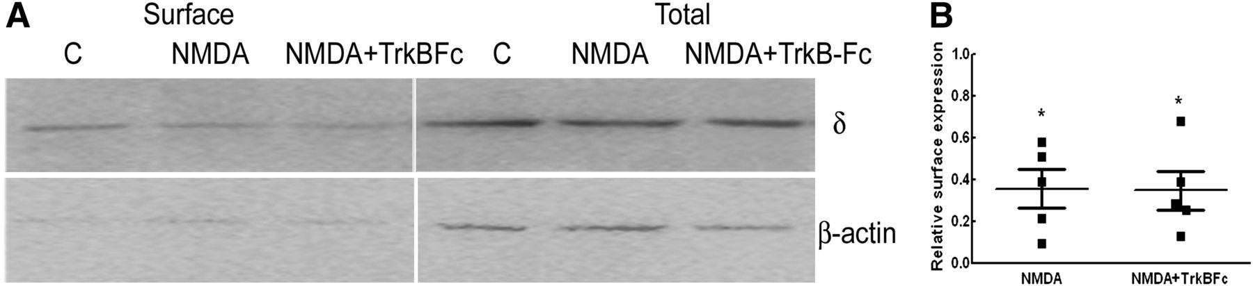 neurosteroid modulation of synaptic and extrasynaptic gabaa receptors