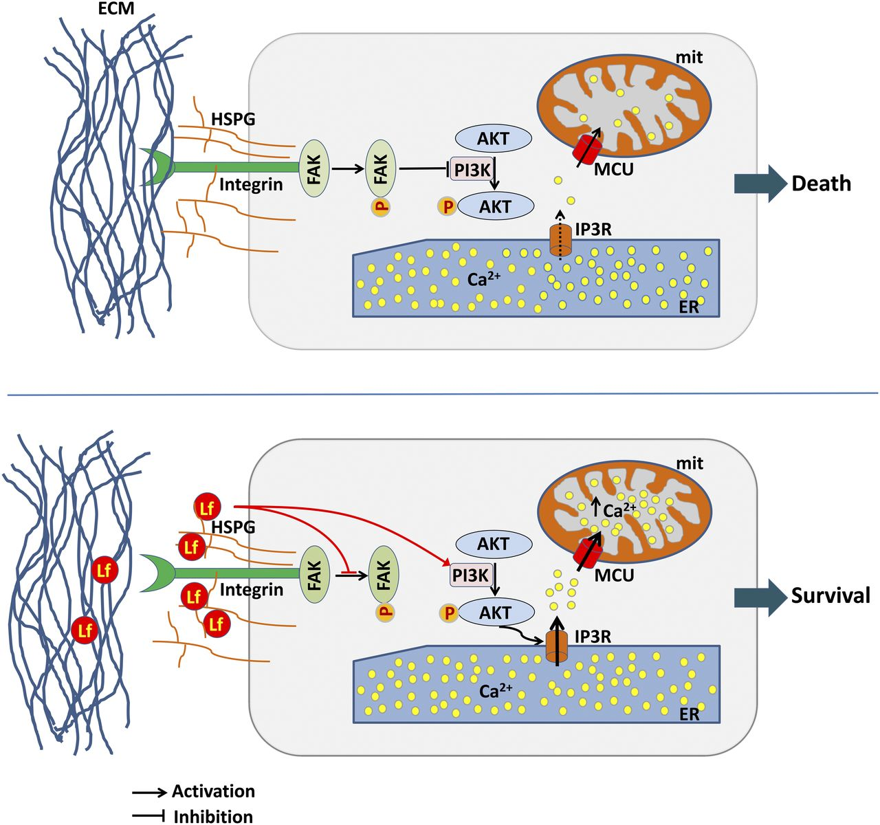 The Iron-Binding Protein Lactoferrin Protects Vulnerable