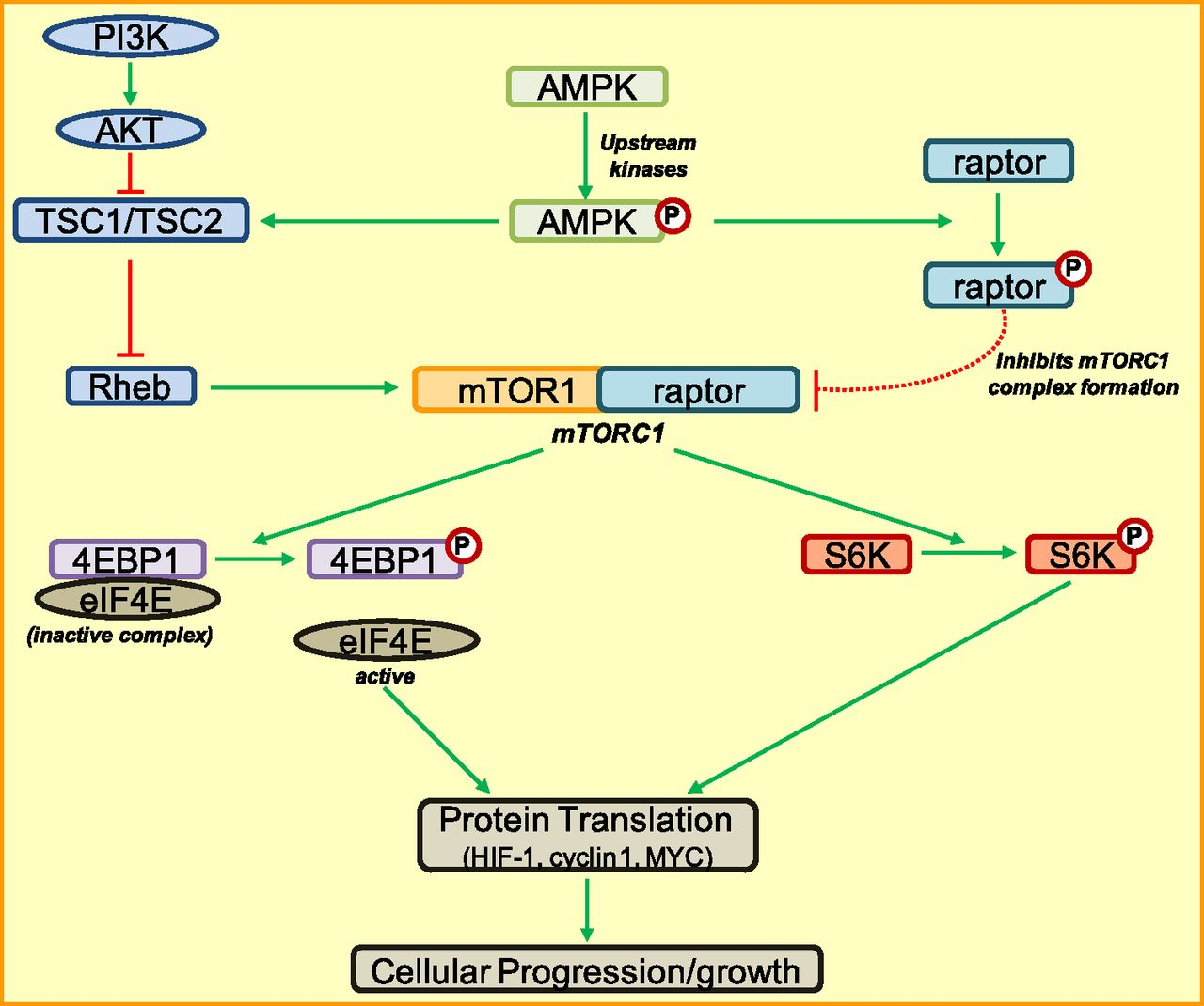 Adenosine Monophosphateactivated Kinase And Its Key Role In Wj Fuse Diagram Download Figure