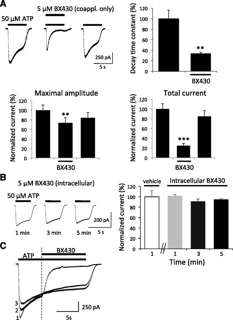 identification and characterization of a selective allosteric antagonist of human p2x4 receptor