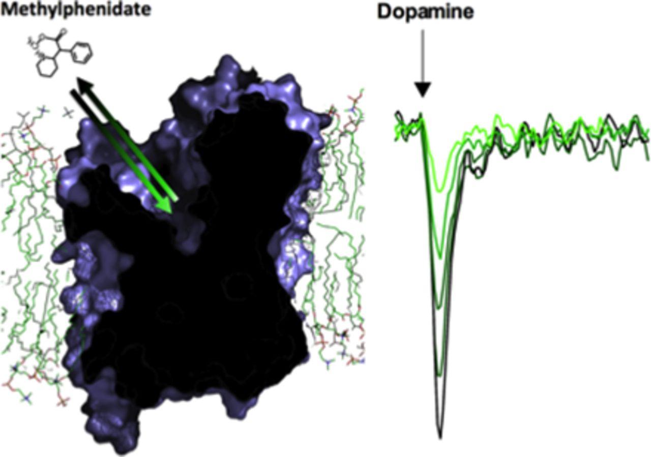 Ligand Selectivity among the Dopamine and Serotonin