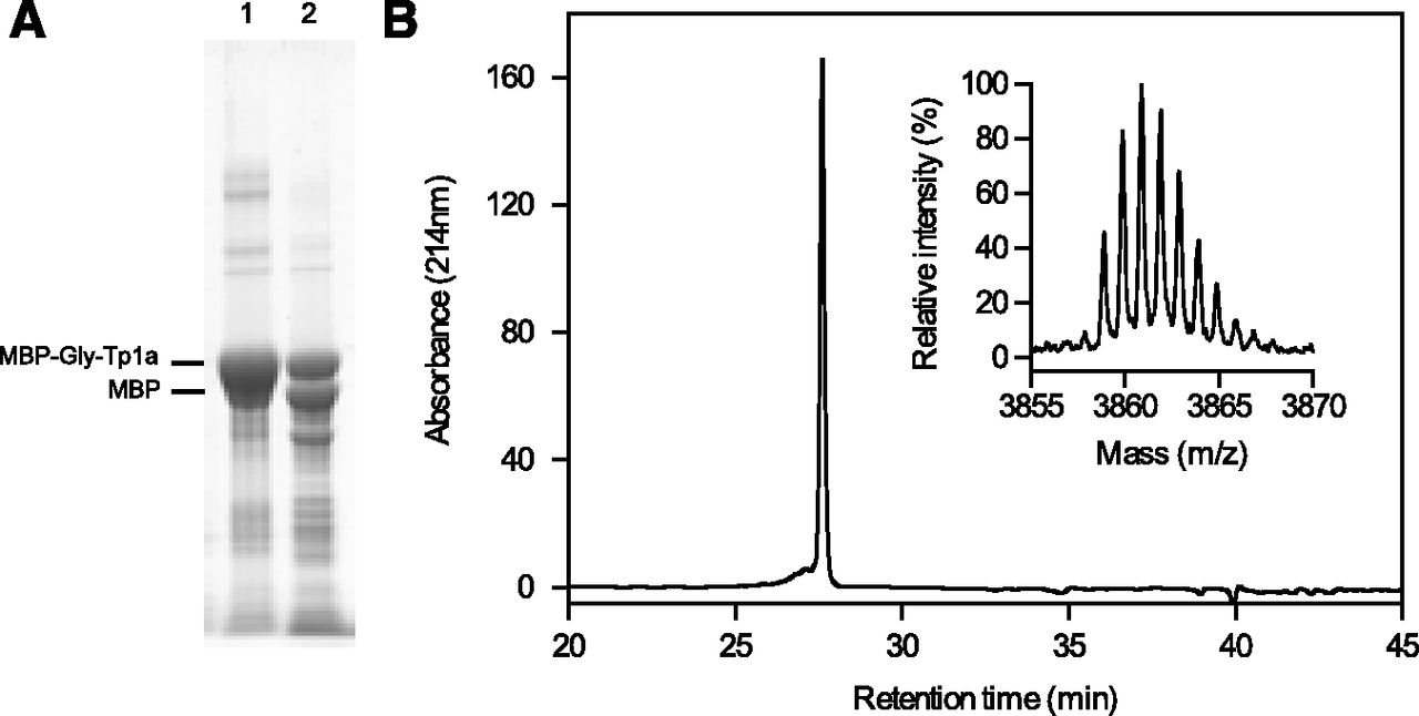 Identification and Characterization of ProTx-III [μ-TRTX