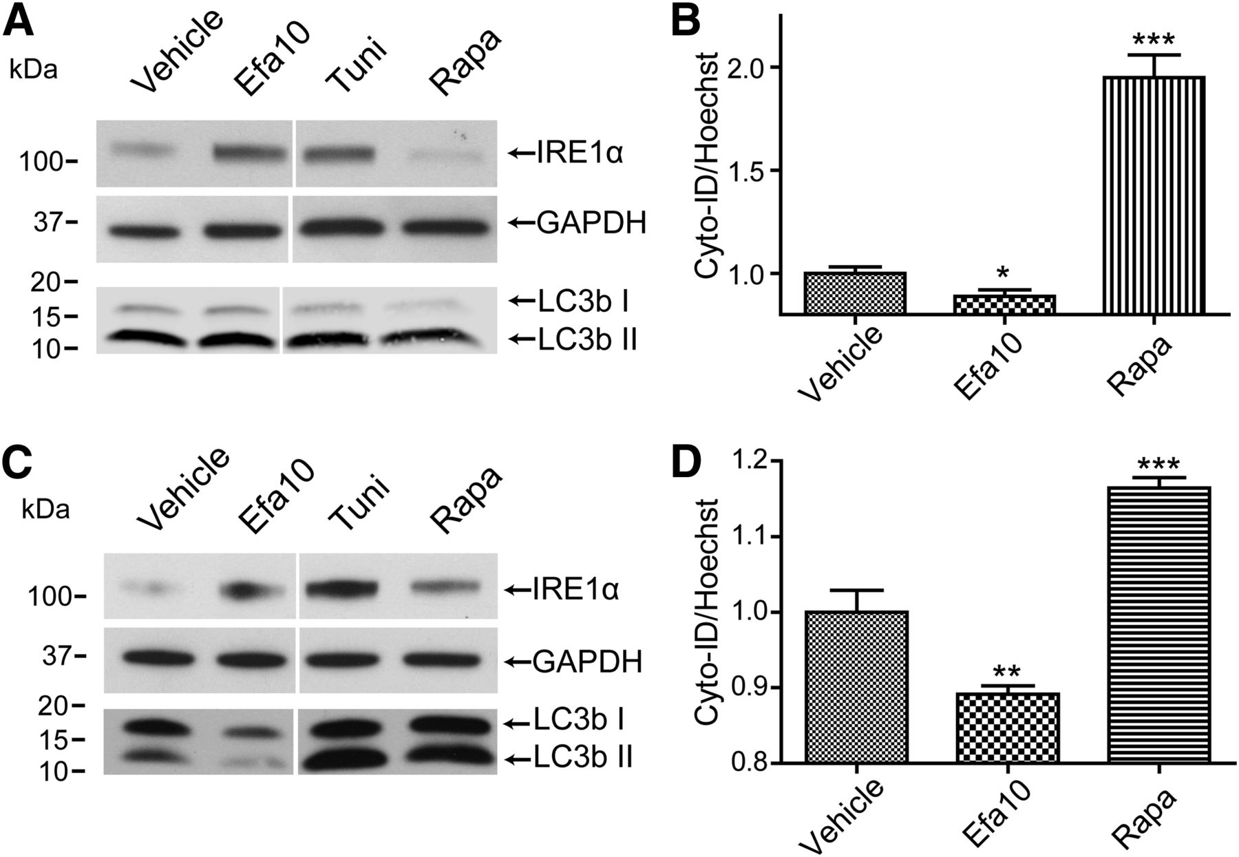 Dysregulation of Endoplasmic Reticulum Stress and Autophagic