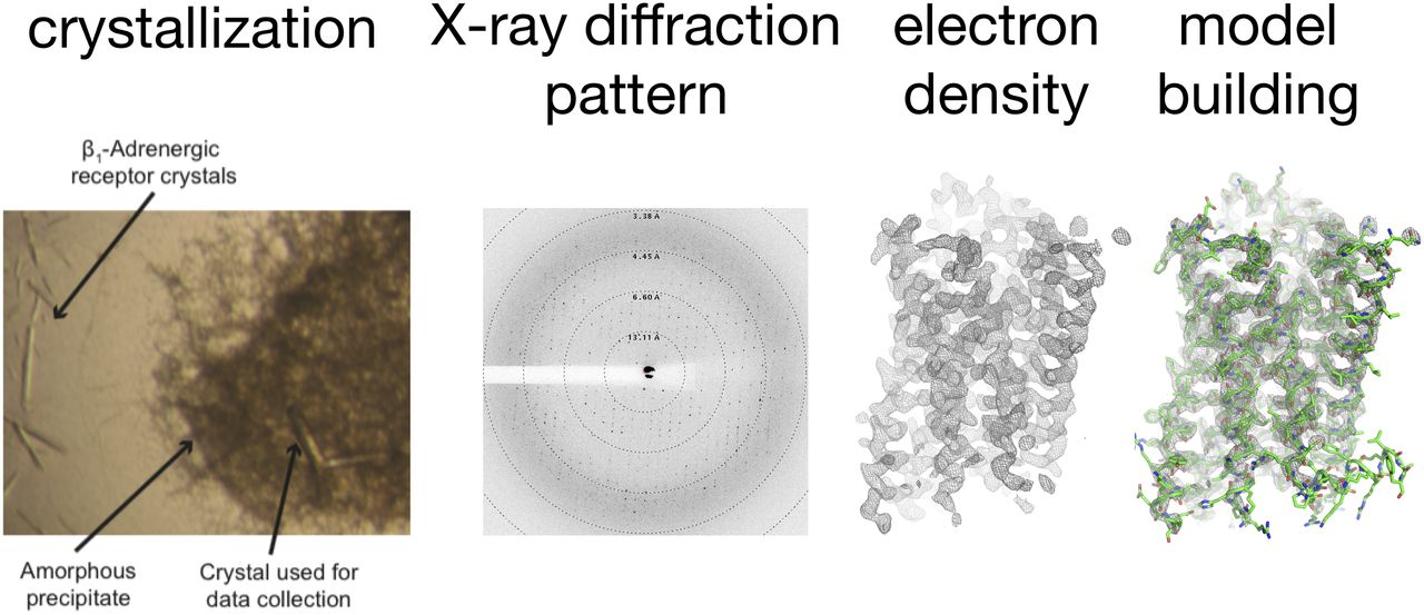 x ray crystallography thesis Any use made of information contained in this thesis/dissertation must be in  of  structure solution techniques via powder x-ray diffraction (pxrd) has played an.