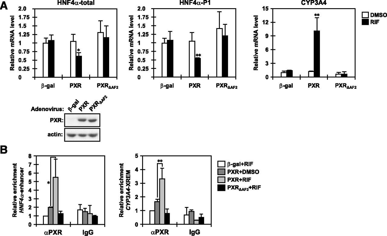 Pregnane X Receptor Represses HNF4α Gene to Induce Insulin