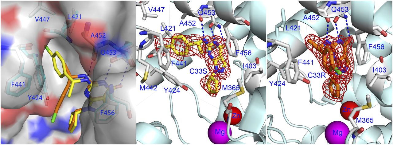 Structural Asymmetry of Phosphodiesterase-9A and a Unique Pocket for