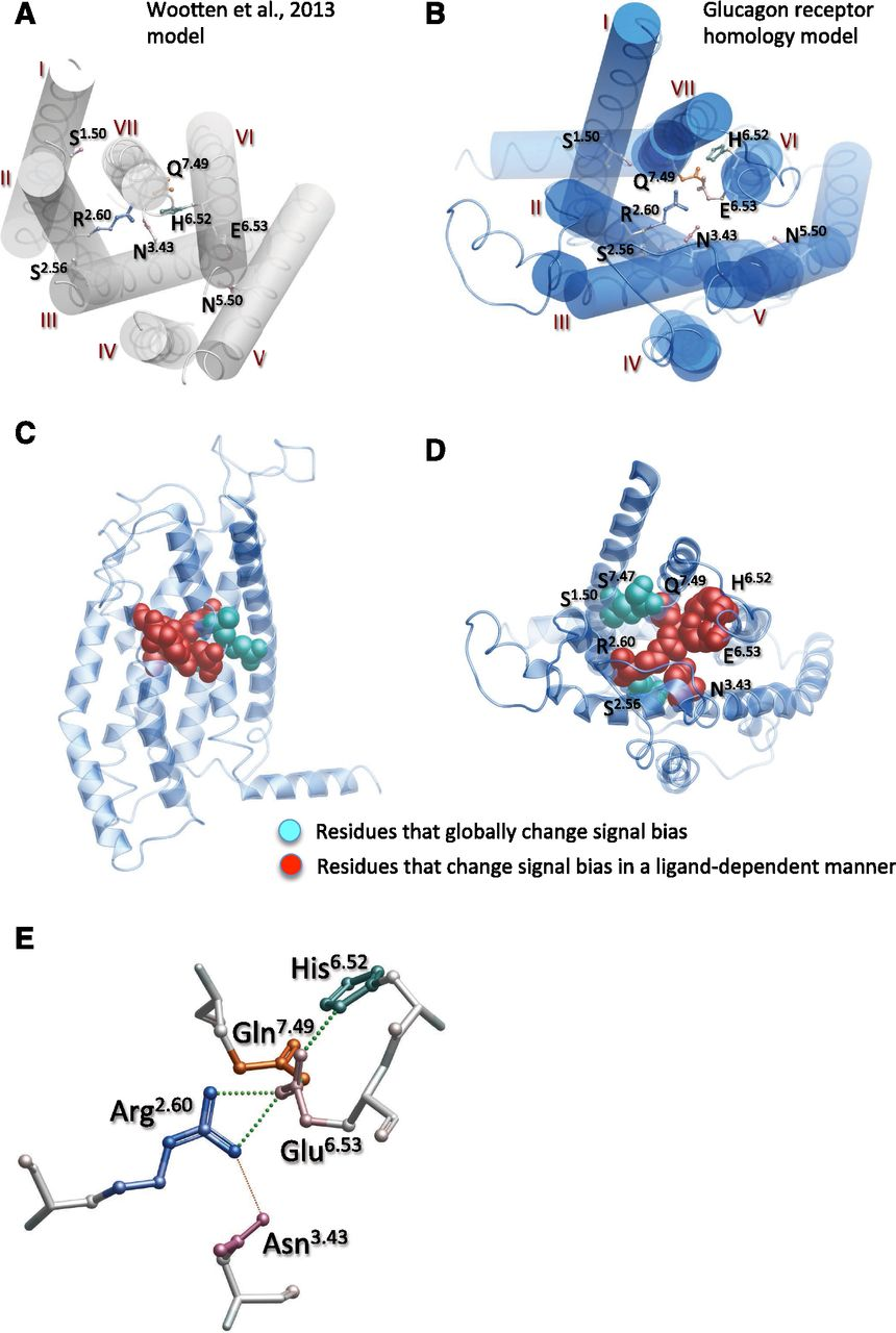 A Hydrogen Bonded Polar Network In The Core Of Glucagon Like