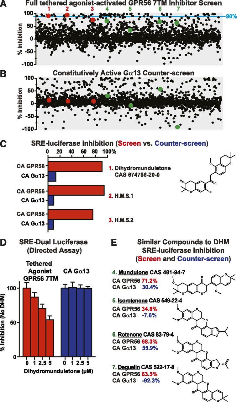 Dihydromunduletone Is a Small-Molecule Selective Adhesion G