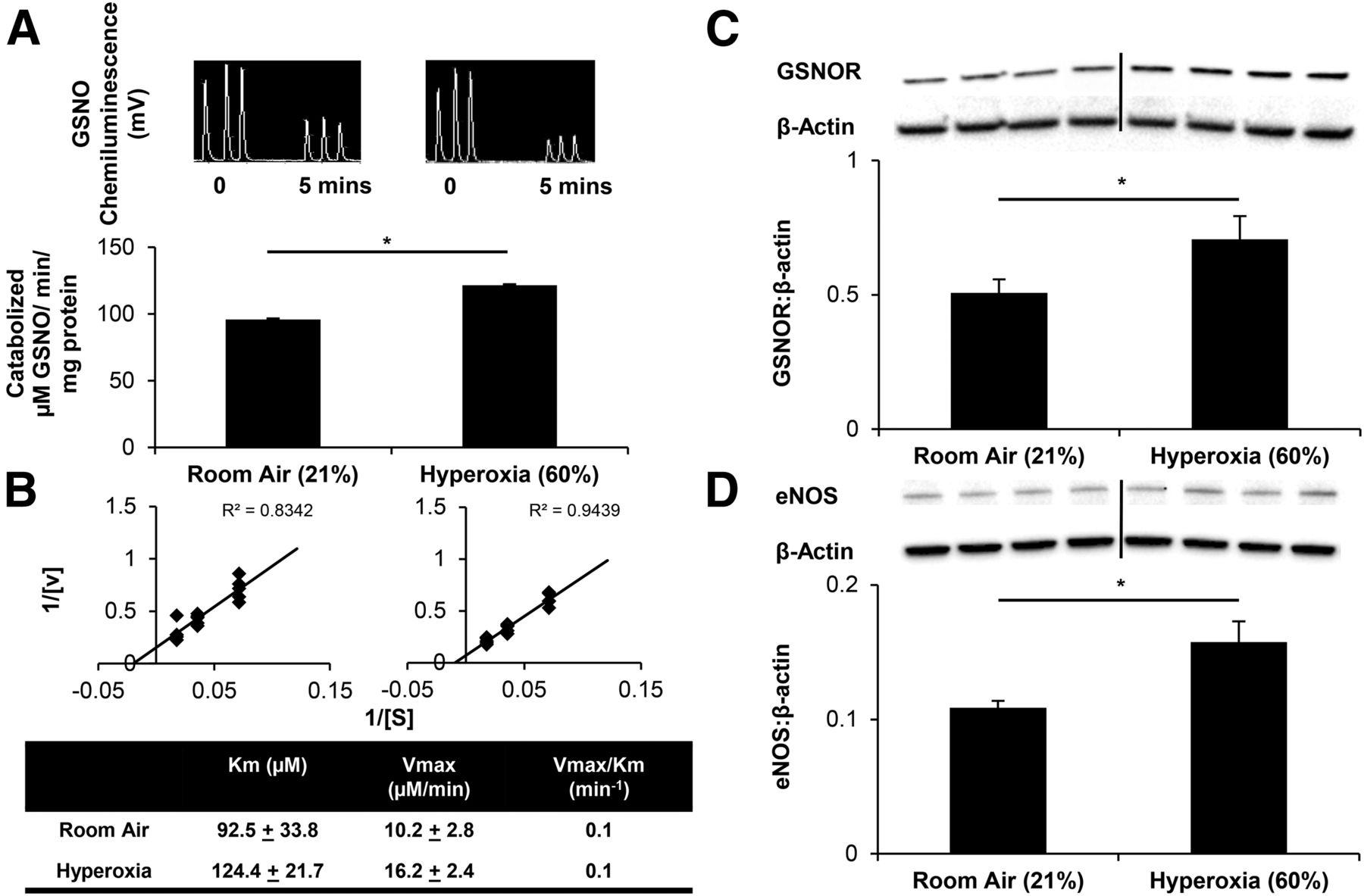 S-Nitrosoglutathione Attenuates Airway Hyperresponsiveness
