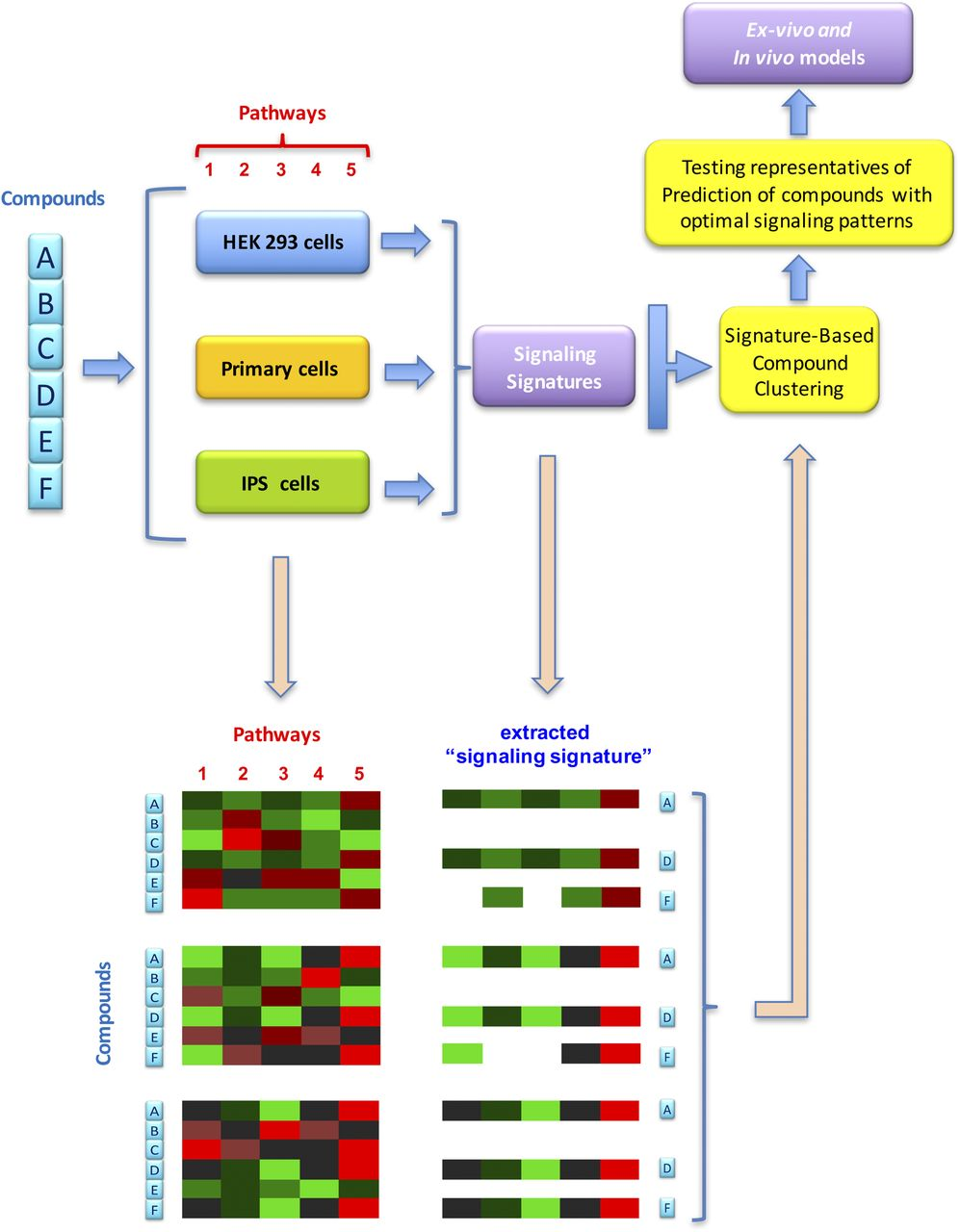A Pluridimensional View of Biased Agonism | Molecular Pharmacology