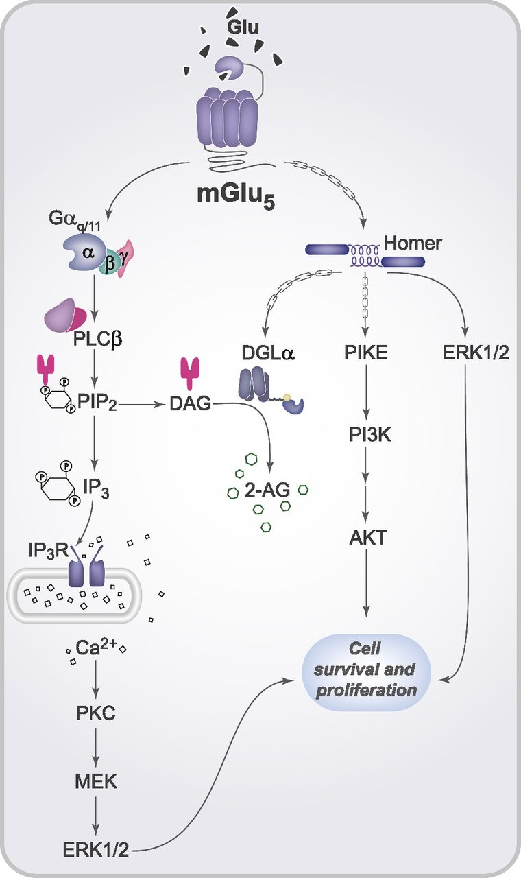 Dissecting the signaling pathways involved in the crosstalk between fig 1 ccuart Choice Image