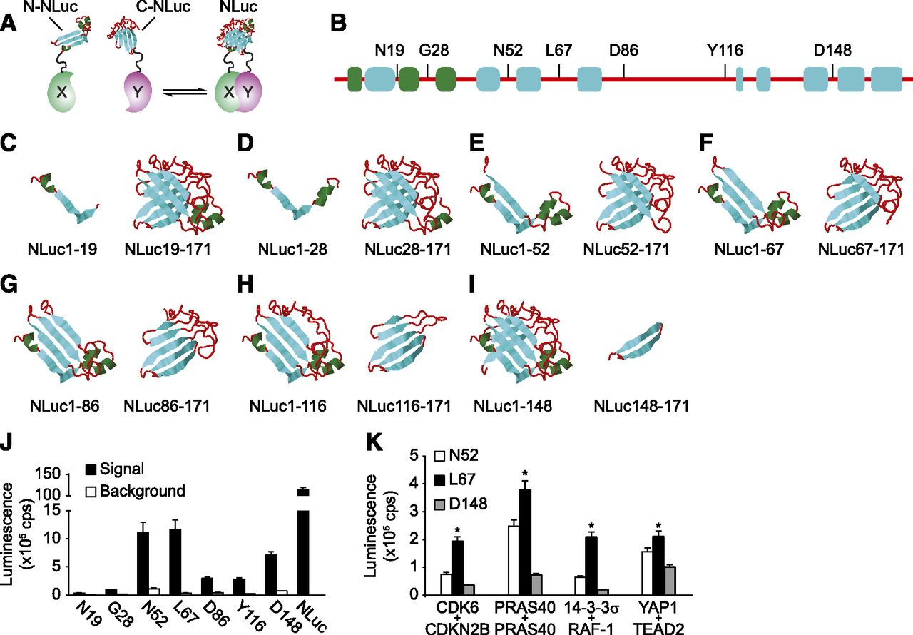 AKT1, LKB1, and YAP1 Revealed as MYC Interactors with ...