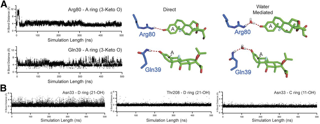 Structural Analysis of the Glucocorticoid Receptor Ligand