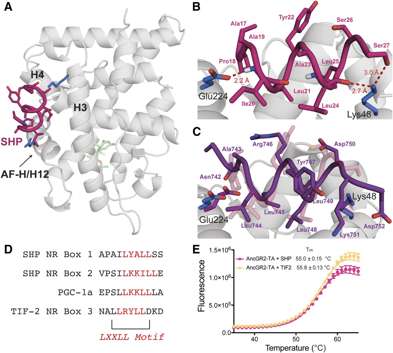 Structural Analysis of the Glucocorticoid Receptor Ligand-Binding