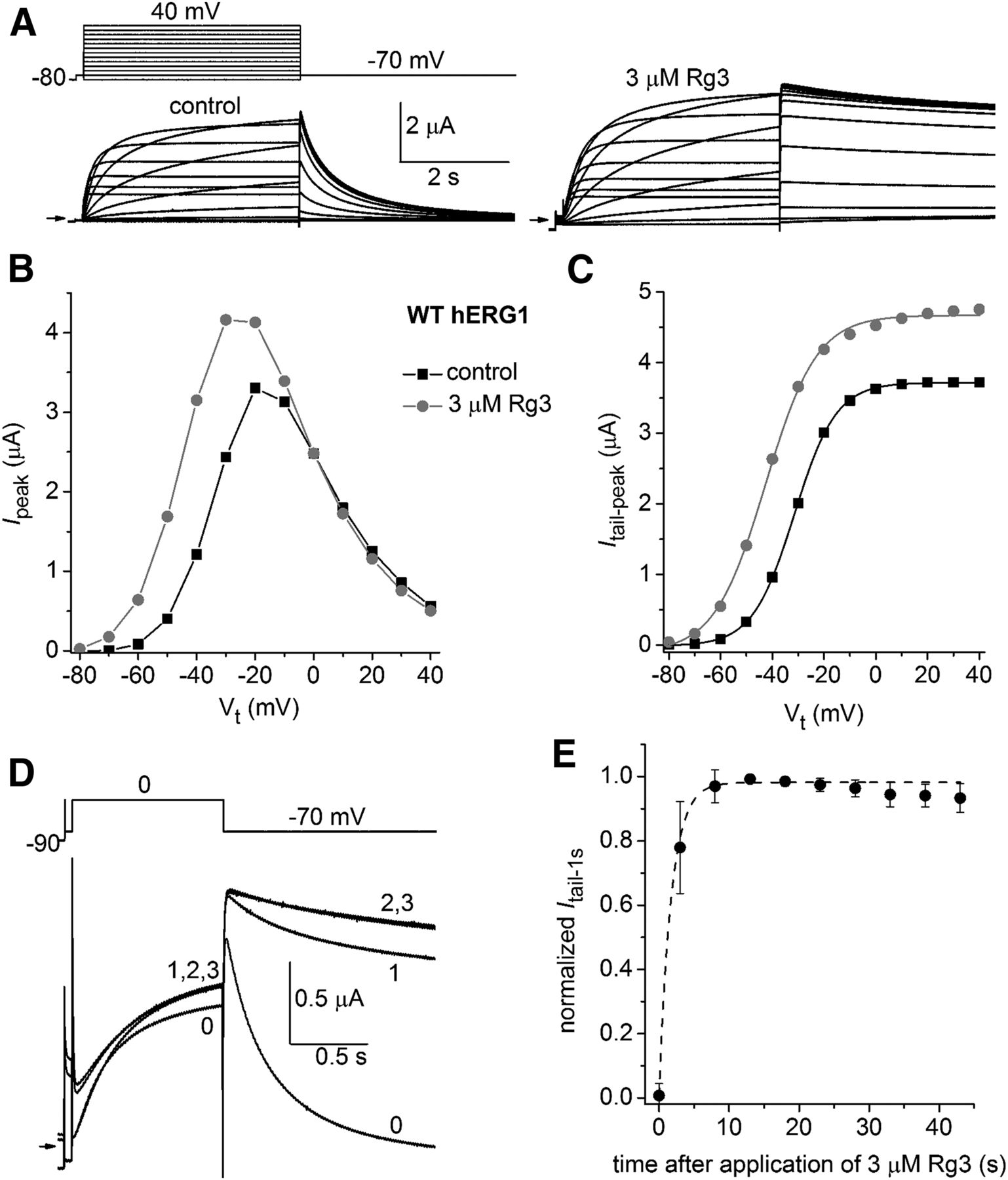 Molecular Basis of Altered hERG1 Channel Gating Induced by